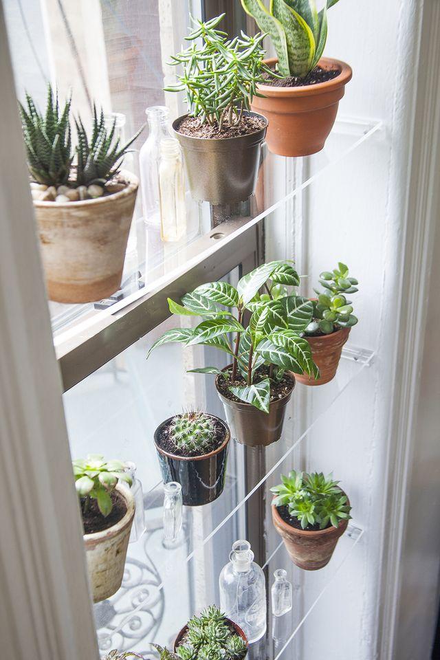 Aloe Vera: The Medicine Plant for the Kitchen
